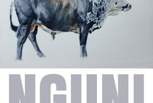 Nguni Cattle Paintings by Murray / Paintings of African Nguni Cattle by Murray