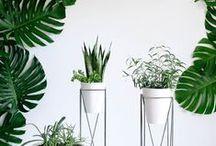 plants / Moje inspiracje roślinami. My plants inspirations.