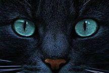 Animaux / Ce tableau conserve tous les animaux