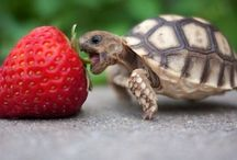 Cute♡animals / Animals that are to cute for words