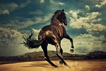 Horse / by Chris Holland
