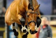 Equestrian  / by Kayla Cardinal