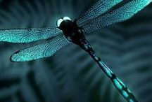 Dragonflies / by Rubie D