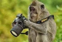 Primates, mes adorables préférés / by Dodo .