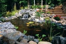 Pond & Garden Beauty / Crafts and fun for the backyard or pond. / by Drs. Foster and Smith