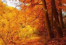 ▪colores▪naranja, orange,arancione / #naranja en decoración, naturaleza, frases ...todo naranja Naranja de felicidad!!