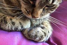 Patchouli mon chat
