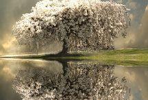Reflections / Refleksjoner og speilinger