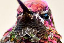 Birds / Fugler