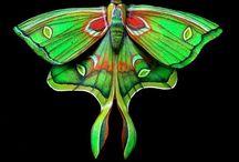 Butterflies / Sommerfugler