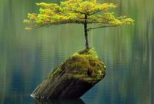Trees and wood / Trær