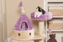 Fit For a Princess / Treat your kitty like the princess she is with these fun feline items!  / by Drs. Foster and Smith