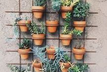 a growing love for herbs