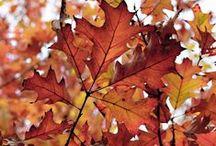 Otoño/Fall