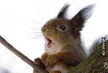 squirrels _ ardillas