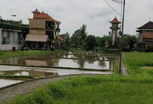 Indonesia / Pictures and blog posts about Indonesia