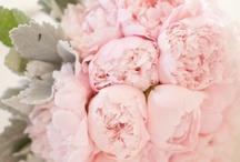 ♥ Bloemen