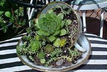 GARDENING /  Great gardening ideas, requires great actions, or great dreams.