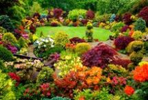 Outdoor Living / Gardening, landscaping, and all things outdoors