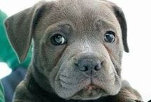 Cachorros / #dogs #puppys #Perros #Mascotas