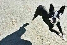 Fun! / #fun #dogs #perros #diversión #tierradeperros