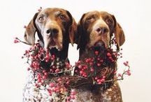 Fotografía / #dogs #perros #fotografia #mascotas #animales #naturaleza #color #tierradeperros