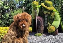 a topiary or two / Big or small, they are a gardener's challenge to grow and keep trimmed......but there is always a gardener who likes a challenge. Cheers to them.