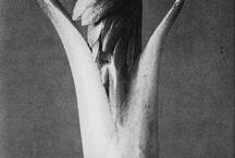 Karl Blossfeldt (1865-1932)