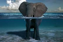 Elephants, Elephants!! / by Maura Petzolt