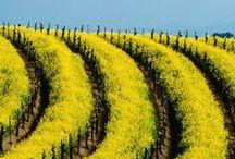NorCal - Wine Country - Napa
