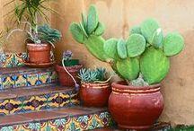 Plant Nerd / Plants, gardening, Cactus, green thumb, taxonamy
