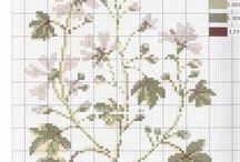Mango Pratique - Jberbarium Jbernier (Herbarium Herbier)