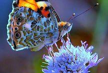 вęęs, вЦƮƮęЯբlყ & lǞDყвЦg / Bijen, vlinders en lieveheersbeestjes