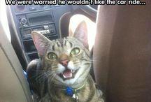 Funny / by Kaitlyn Auclair #AlwaysKeepFightingJared