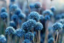 ** Flowers - Bouquets **