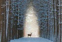 WINTER / Snowy goodness
