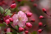 O amor é cor de rosa