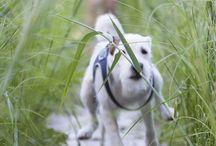 Dog I like / #cute #dogs