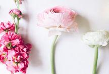 Flowers I like / #flowers #flowerpower