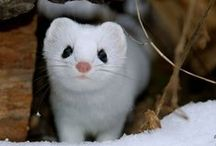 Animals / The cute and furry