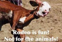 Boycott rodeo ! / by Arduinna Kara