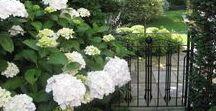 Garden Gates / Garden gates, contemporary and traditional