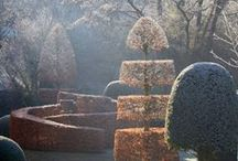 Winter Garden / Frosted stems and evergreens