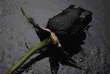 black / by brenna wafer