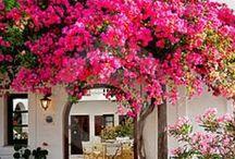Exteriér - záhrada - kvety