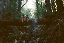◣ Woodland ◥