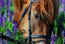 Horses & riding