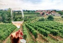 Wine Tourism / Aleksandrovic Winery develops a wine tourism in the Sumadija region of Serbia. We offer a variety of wine tastings, wine and food pairings as well as team buildings. For more info call us on +38162221966