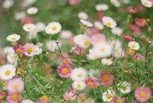 ◣ Beautiful Spring ◥