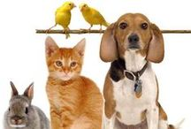 Pet Quotes / Inspiring quotes for pet lovers. Pets make our lives so much better.